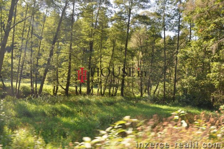 Prodej lesu