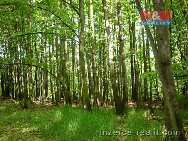 Prodej, les, 2579 m2, Dívčí Hrad