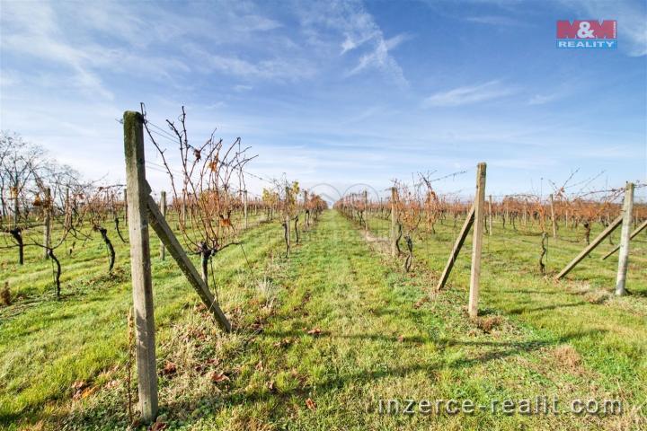 Pronájem, vinice, 4449 m2, Ivančice