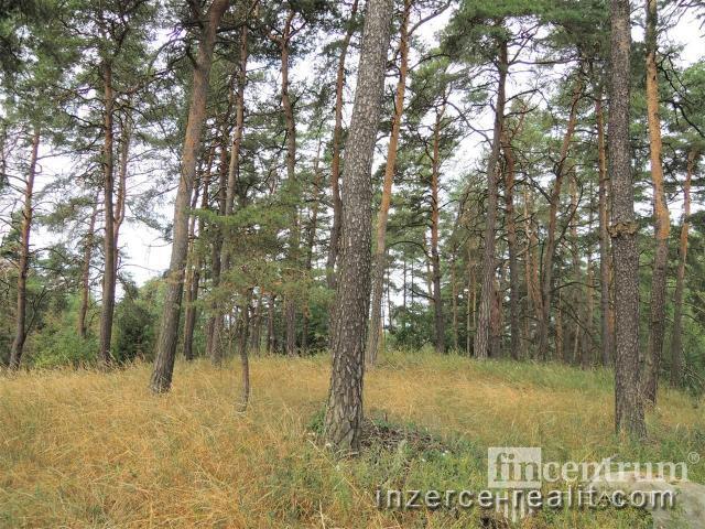 Prodej lesa 14935 m2, Velké Meziříčí